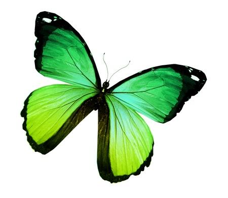 Morpho papillon vert jaune, isolé sur blanc Banque d'images - 15192097