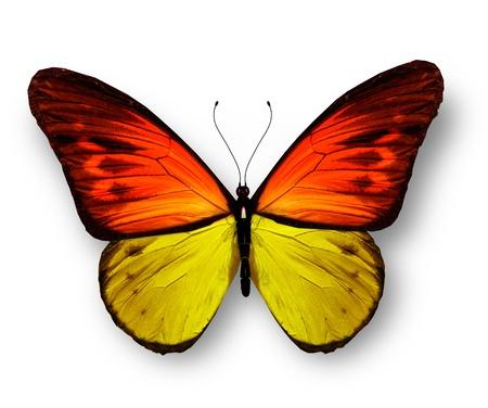 butterflies flying: Giallo, arancio, farfalla, isolato su sfondo bianco