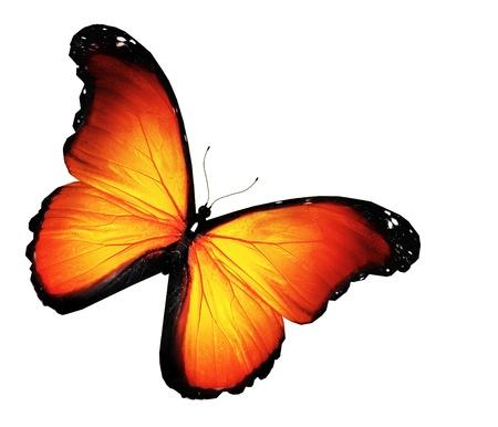 mariposas volando: Mariposa naranja sobre fondo blanco