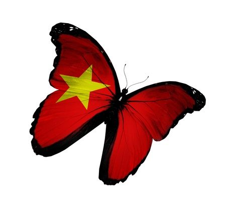Vietnamese flag butterfly flying, isolated on white background photo