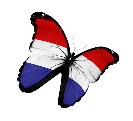 netherlandish: Netherlandish flag butterfly flying, isolated on white background
