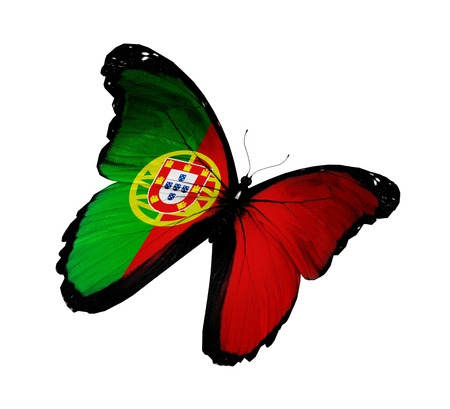 portugal flag: Portuguese flag butterfly flying, isolated on white background Stock Photo