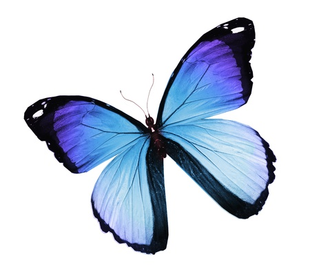 Blue butterfly , isolated on white Stock Photo - 14989490