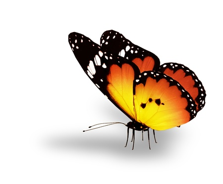 yellow butterfly: Orange butterfly on white background Stock Photo