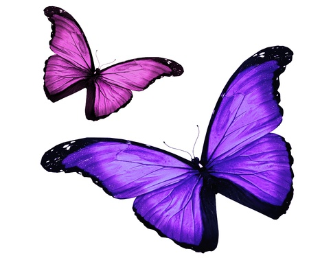Two butterfies on white background photo