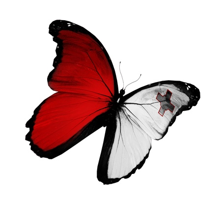 Maltese flag butterfly flying, isolated on white background photo