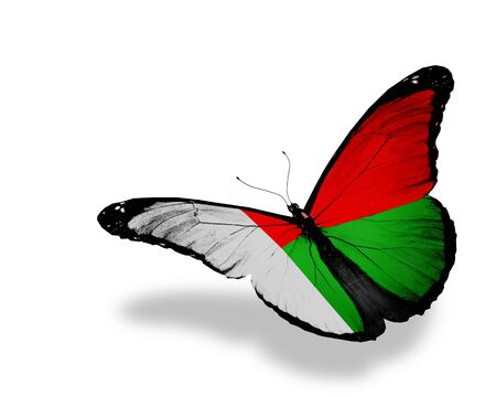 Madagascar flag butterfly flying, isolated on white background