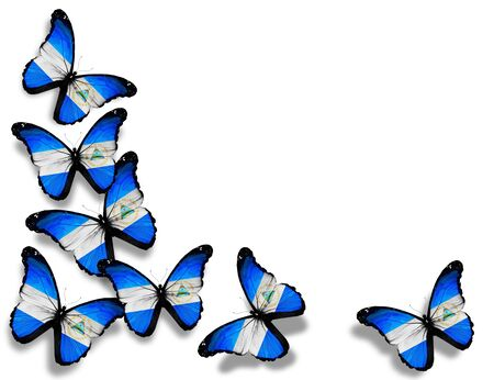 Nicaragua flag butterflies, isolated on white background photo