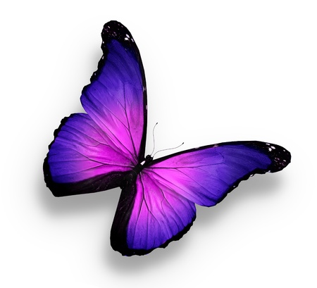 Violet butterfly on white background photo