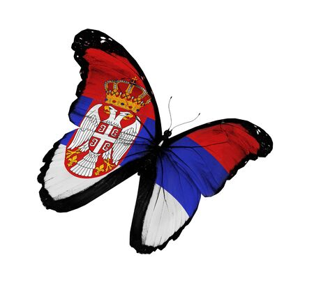 Serbia flag butterfly flying, isolated on white background Stock Photo - 15126170