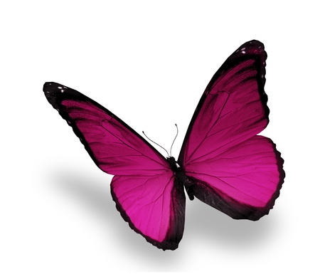 Violet butterfly on white background Stock Photo - 15126290