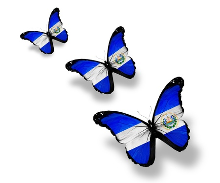 el salvador: Three Salvador flag butterflies, isolated on white Stock Photo