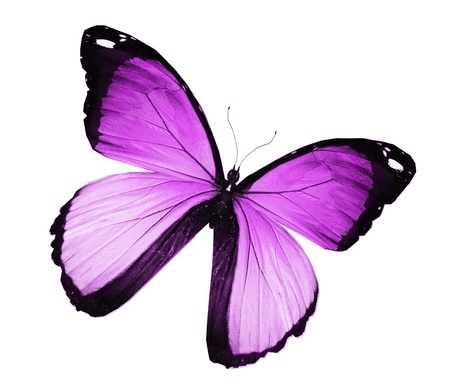 Violet butterfly , isolated on white Stock Photo - 15306586