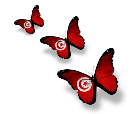 Three Tunisian flag butterflies, isolated on white photo