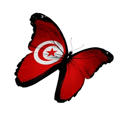Tunisian flag butterfly flying, isolated on white background photo