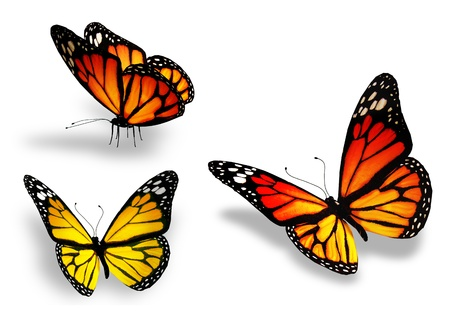 black and blue butterfly flying: Three yellow butterfly, isolated on white background