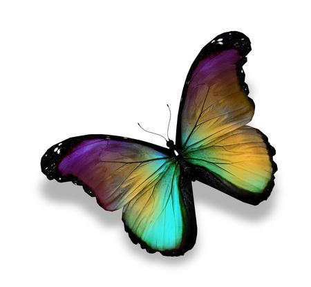 mariposas volando: Verde oscuro oro violeta mariposa morpho, aislado en blanco Foto de archivo