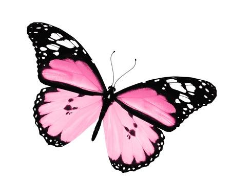 papillon rose: Papillon rose, isolé sur fond blanc Banque d'images