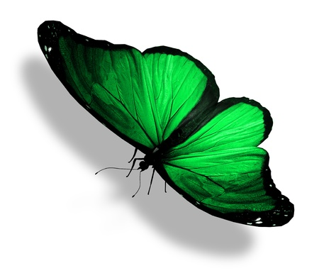 Green butterfly , isolated on white Stock Photo - 15306811