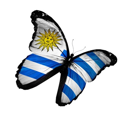 uruguay: Uruguayan flag butterfly flying, isolated on white background