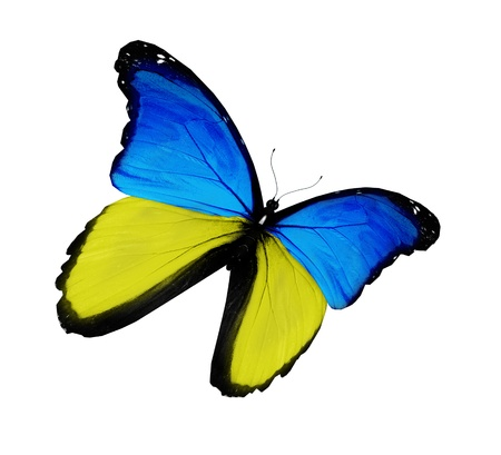 Ukrainian flag butterfly flying, isolated on white background Фото со стока