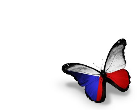Czech flag butterfly, isolated on white background photo