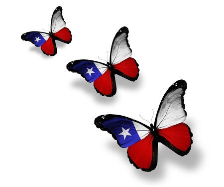 bandera chilena: Tres mariposas bandera chilena, aislados en blanco