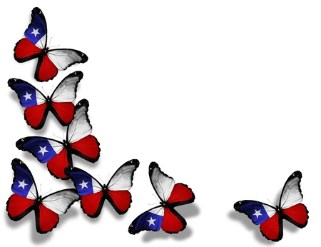 chilean flag: Mariposas chilenas bandera, aislado sobre fondo blanco