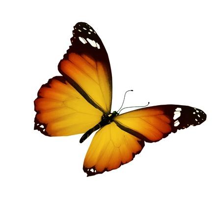 butterflies flying: Orange amarillo mariposa volando, aislado sobre fondo blanco