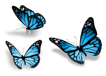 Three blue butterfly, isolated on white background Stock Photo