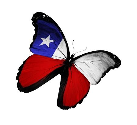 chilean flag: Bandera chilena mariposa volando, aislado sobre fondo blanco Foto de archivo