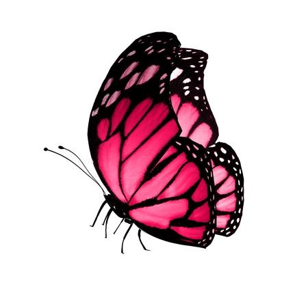 papillon rose: Papillon rose, isol� sur blanc