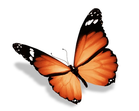 butterflies flying: Orange farfalla, isolato su bianco