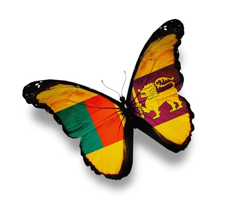 Sri Lanka flag butterfly, isolated on white photo