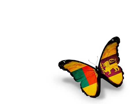 Sri Lanka flag butterfly, isolated on white background photo