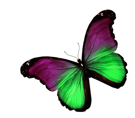 Violet green butterfly on white background photo