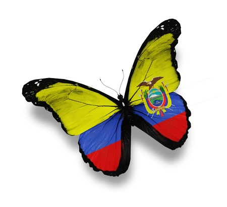 Ecuador flag butterfly, isolated on white photo