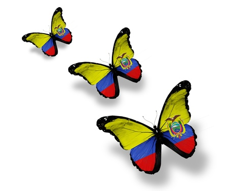 Three Ecuador flag butterflies, isolated on white photo