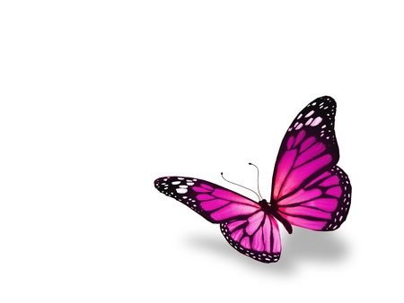 butterfly isolated: Pink butterfly, isolated on white background