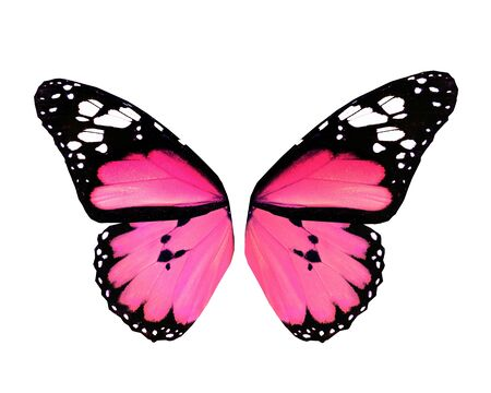 papillon rose: Ailes de papillon rose, isolé sur fond blanc