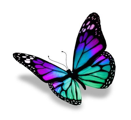 mariposa azul: Mariposa, aislado en fondo blanco