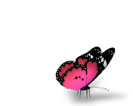 neon background: Red butterfly on white background