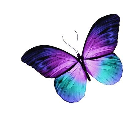 흰색 배경에 고립 된 블루 나비,