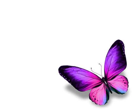 papillon rose: Violet papillon, isol� sur fond blanc