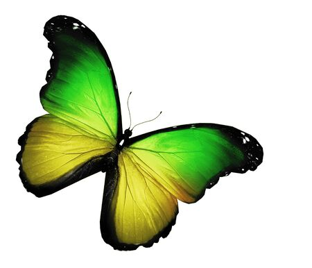 Green yellow butterfly on white background photo