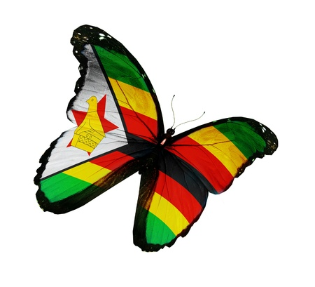 Zimbabwe flag butterfly flying, isolated on white background photo