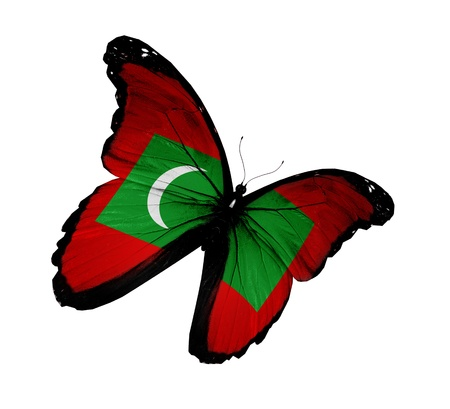 maldivian: Maldivian flag butterfly flying, isolated on white background Stock Photo