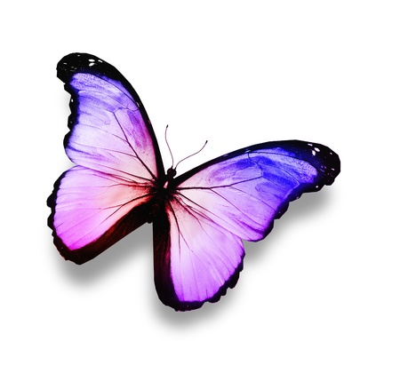 Blue, violet ,white butterfly, isolated on white photo