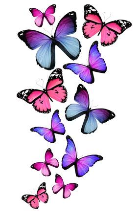 papillon rose: Beaucoup de papillons diff�rents isol�es sur fond blanc