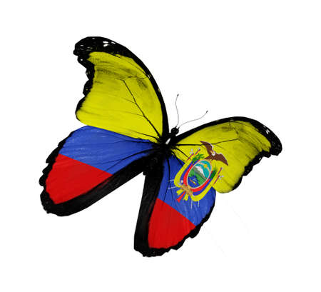 Ecuador flag butterfly flying, isolated on white background photo